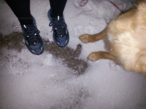 Another snowy run shared with Twogs